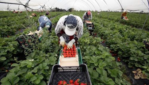 Huelva : le quota des saisonnières marocaines réduit à 30%