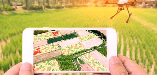Numérisation : Désormais, l'agriculture se conjugue au digital