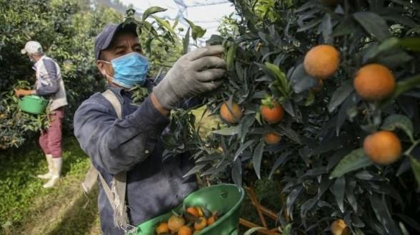 Quelque 300 saisonniers marocains acheminés en décembre vers le sud-est de la France