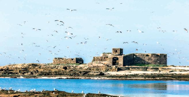 Archipel de Mogador : De la valeur historique et écologique
