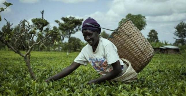 Rapport économique sur l'Afrique 2020 : Pour un financement novateur au profit du secteur privé