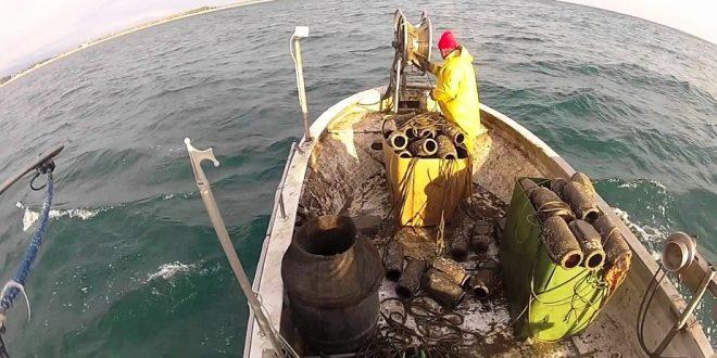 Campagne d'été de pêche de poulpe : Plus de 3.800 T débarqués à Dakhla