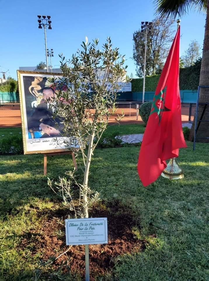 Casablanca : Un olivier planté en signe de fraternité entre musulmans et juifs