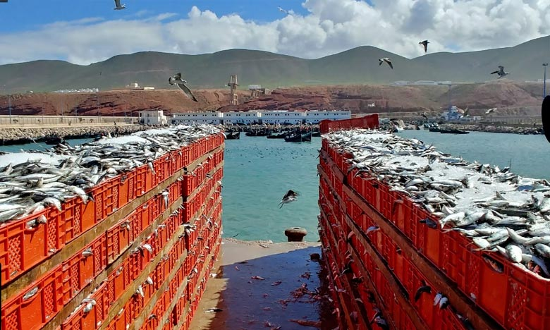 ONP : Sidi Ifni contribue à hauteur de 2,5 pc au chiffre d'affaires des ports du Royaume