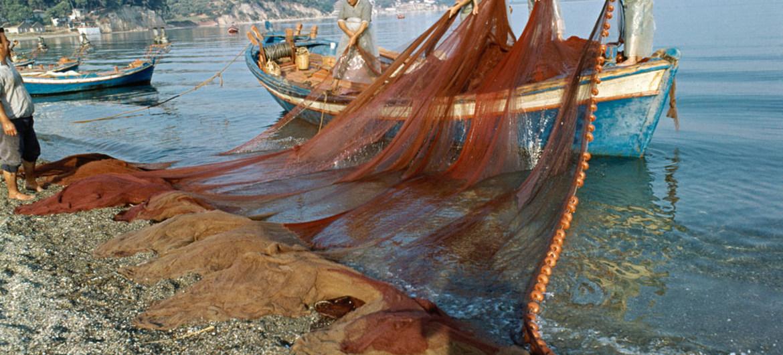 L'ONU annonce de nouveaux dispositifs d'identification pour lutter contre la pêche illégale