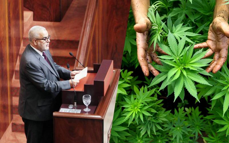 Légalisation du Cannabis : Une bombe à retardement au sein de la majorité