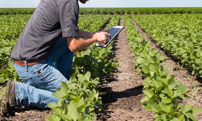 L'OCP et le CAM s'allient pour un meilleur accès des agriculteurs aux solutions mobiles de financement