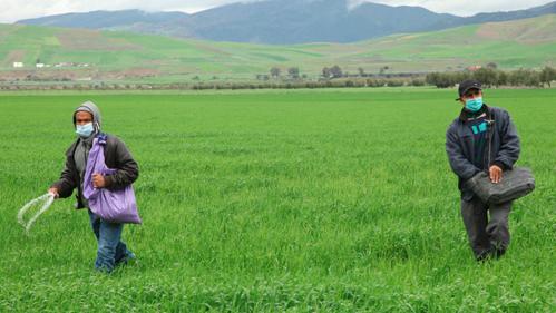 Agriculture: 4,5 milliards de DH programmés en soutien aux investissements privés en 2021