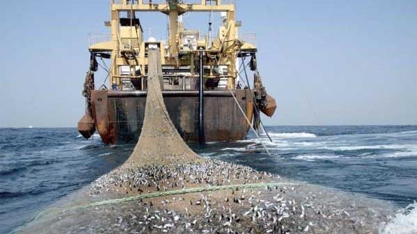 Usage de filets dérivants par la flotte marocaine : le Royaume risque la sanction