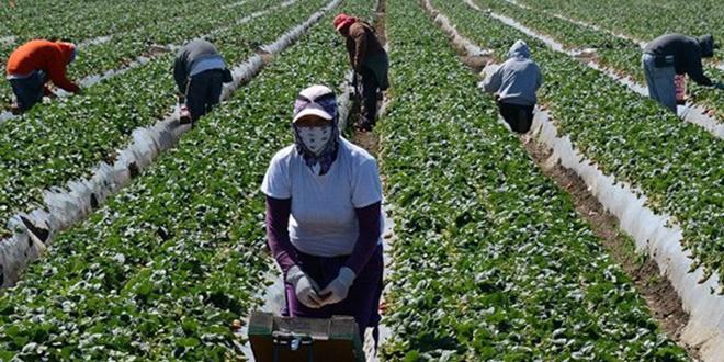 Arrivée de 523 travailleuses saisonnières marocaines d'Espagne