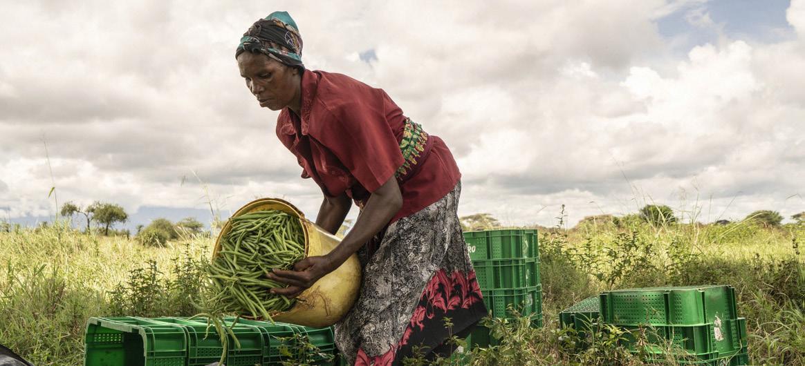 Nouveau rapport de la CNUCED sur la ZLECAf : Faire de la biodiversité le moteur du commerce durable