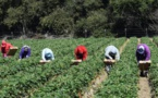 Soulagement de milliers de travailleuses marocaines qui retourneront en Espagne