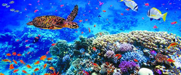 600 espèces animales et 1700 espèces végétales menacées d'extinction au Maroc