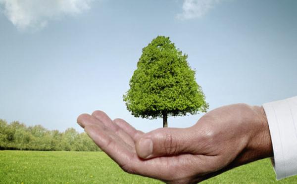 """Une action citoyenne : """"50 millions d'arbres"""""""