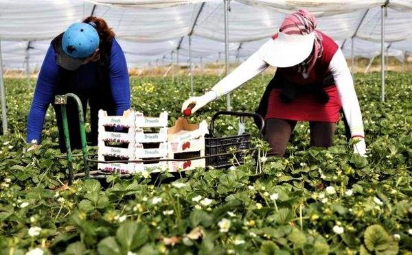 Le mois de juin risque d'être sombre pour les 7000 saisonnières marocaines en Espagne