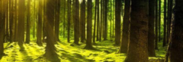 Post-Covid : le WWF plaide pour des plans de relance durables