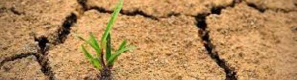 Journée internationale de lutte contre la désertification: Le Maroc soutient la gestion durable des terres