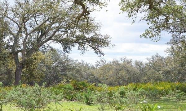 Aires protégées : Les parcs nationaux sous la loupe de la Cour des Comptes
