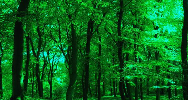 Changements climatiques: la Nature est la solution