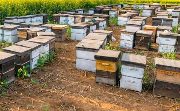 Jerrada : Nouveaux projets pour renforcer les filières du miel et des arbres fruitiers
