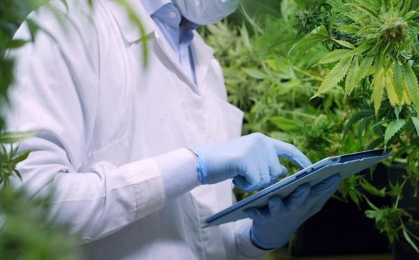 Usage licite du cannabis : Désignation des membres de l'Agence relative à la gestion du cannabis