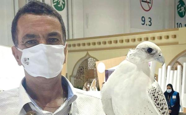 El Jadida : L'art de la fauconnerie Lekouassem s'envole pour Dubaï