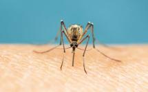 Ces moustiques qui nous pourrissent la vie