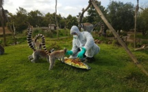Le zoo de Rabat aux petits soins pour ses animaux