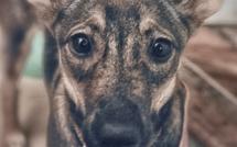 Coronavirus: les abandons d'animaux domestiques explosent