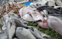 Poisson de Ramadan: offre abondante à Sidi Bernoussi