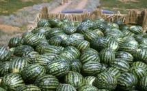 Agroalimentaire : L'export de la pastèque et de l'avocat explose, malgré Coronavirus