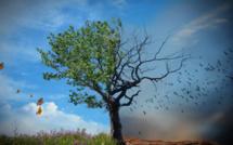 Une étude pour le financement du Plan d'investissement climat du Sahel est en vue pour les prochaines semaines.
