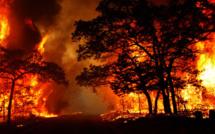 Environnement : Neutralisation du plus grand feu de forêt de l'année