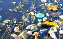 Les maladies causées par la perte de la biodiversité préoccupent l'ONU