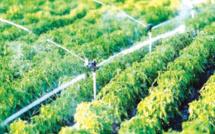 Génération Green 2020-2030 : Le plan d'actions 2021 du Gharb