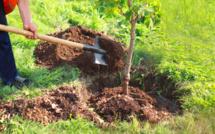 Maroc : Plantation de plus de 30.000 arbres fruitiers dans 11 régions