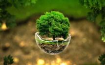 12 bonnes nouvelles pour l'environnement au Maroc en 2020