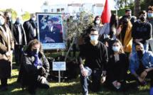 Casablanca : plantation d'un olivier en signe de fraternité  judéo-musulmane