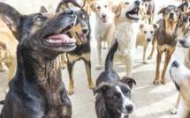 Bouznika : Les animaux errants, un problème persistant