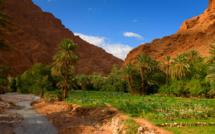 Gestion participative et intégrée : Ultime chance pour sauver les oasis du Royaume