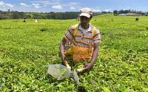 Convention des Nations Unies sur la lutte contre la Désertification en Afrique : le Continent mère peut nourrir la planète