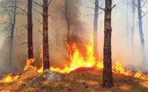 Canicule et feux de forêts : Chronique d'un début d'été de braise