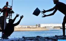 Port d'Essaouira : Les débarquements de la pêche côtière et artisanale en baisse de 55% à fin juin