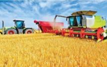 Campagne céréalière : Une « très bonne » récolte de 103,2 Mqx