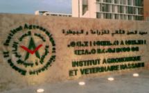 Rabat / IAV : Les étudiants s'opposent au mode distanciel