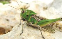 Alimentation alternative : Bientôt des insectes dans nos assiettes ?